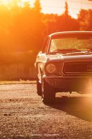 68 Mustang Coupe I by AmericanMuscle