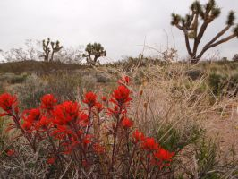 Indian Paint Brush by ClymberPaddler