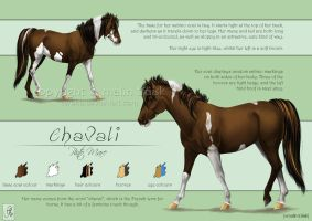 Commission - Chavali Reference by cerona
