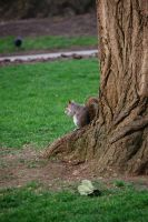 The lonely squirrel by Heurchon
