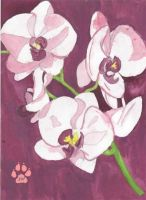 Orchids by Carmadarla
