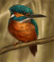 Kingfisher by Thunderbird111