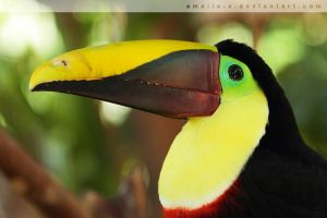 Toucan Pride by amaliabastos