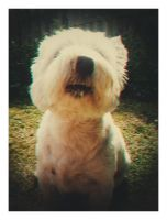 Scamp. by amyjls
