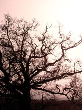 Oak Nerves by The-Photographers