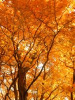 Shades of Autumn 2014.I by MadGardens