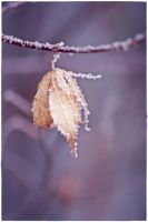 frost 2 by wildtea