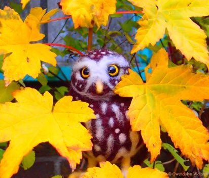 Owly autumn by GwendolynWolters