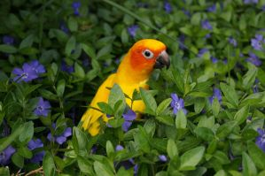 Standing Out in the Plants by shinigamisgem