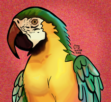 Parrot by CalSlater