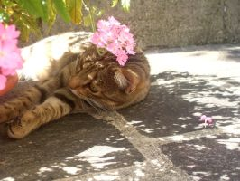 Nice cat photo by Lilith1995