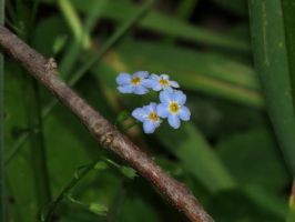 forget-me........NOT by Nipntuck3