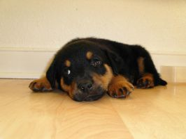 Puppy Pic 3 by Nianya
