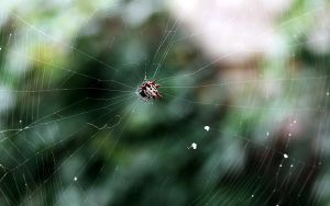 Spiny Orb-Weaver Spider by KAL1MAR1