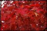 Colours of the Fall VI by Hitomii