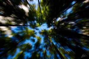 Canopy by andy1349