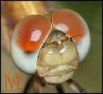 Gold Dragonfly - Crop by microcosmos