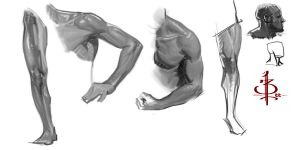 Anatomy studies by FUNKYMONKEY1945