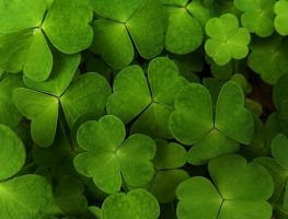 leaf clover by KariLiimatainen