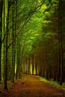 Romanian Forest II by valiunic