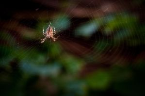 Lonely Spidy by AmbientExposures