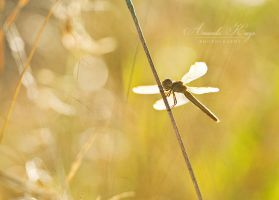 Smiling Dragonfly by kittynn