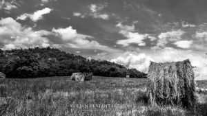 Bales of hay by Koljan