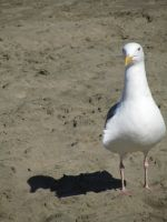 SF SEAGULL by CHRISwillar