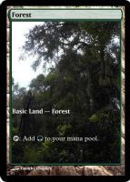Magic Forest Cumberland Island Photo Card V by lizking10152011