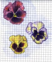 Flowers: pansy 2 by RandomSearcher