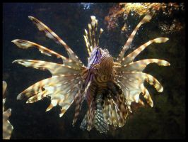 Lion Fish by cosmosue
