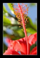 Red Flower Blue Sky by wastingtape