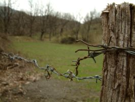 Barbed wire by drugo76
