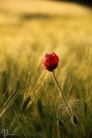 red and green by Steffi-im-Wunderland