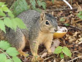 Hello Squirrel! by AthenaPhotography