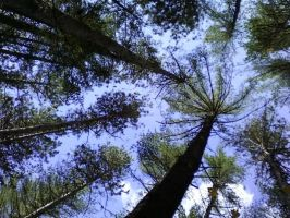 tree top canopy by moonflower-mustang