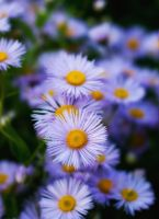 Simple Flower 10982049 by StockProject1