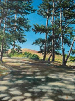 Marin Pines by Hareguizer