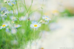 Summer Flowers by Mithertiths