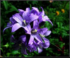 Violet Flowers by JocelyneR