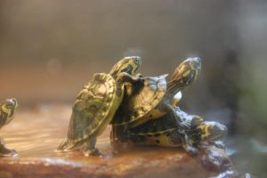 My favorite turtles. by WiiSHA
