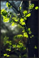 Spring II by cailenc