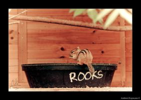 Rooks (Chipmunk) by AmbientExposures