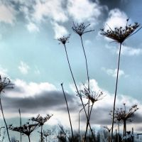 Winter Queen Annes Lace by Moon-Willow