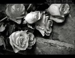 roses for Elena by ValentinaKallias