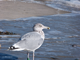 Watching gull by Mogrianne