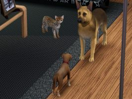 Sims3: Pets by GothicKitta