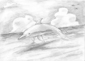 Dolphin by Xilosphere