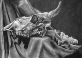 Cow Skulls by HannahNew