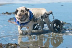 Morty at Dillon Beach. by MarkNewman
